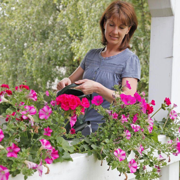 Balkonpflanzen für die pralle Sonne Balkon pflanzen