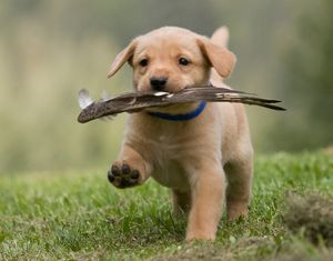 Hunting Already Dogs Dog Training Therapy Dogs