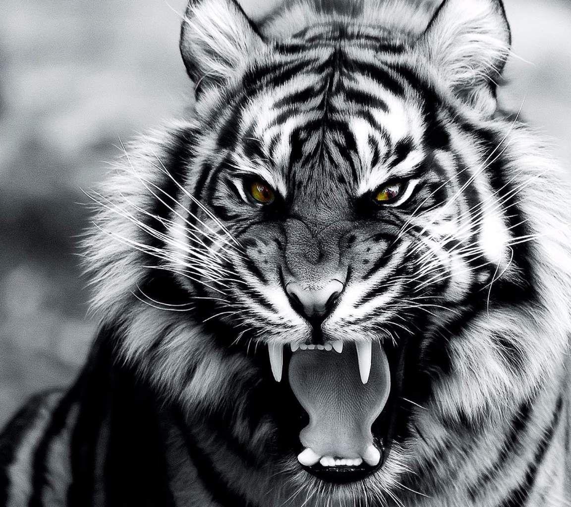 Noir Et Blanc Voyage Onirique Tigre Tigre Photographie Photo Tigre Tigre Blanc