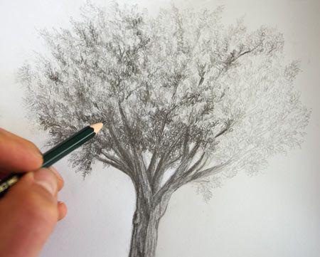 Dessiner Un Arbre Au Crayon En Clair Obscur Drawings Graphismes