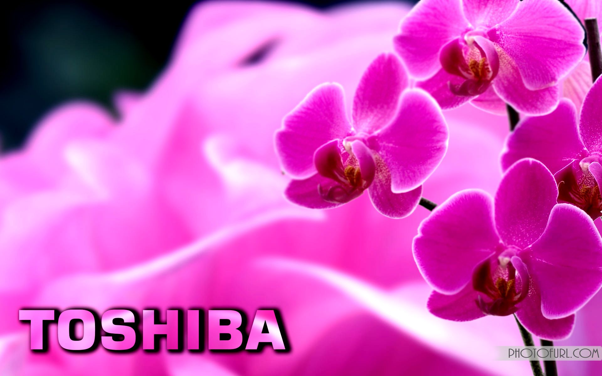 Wallpaper for toshiba laptop free download art wallpapers