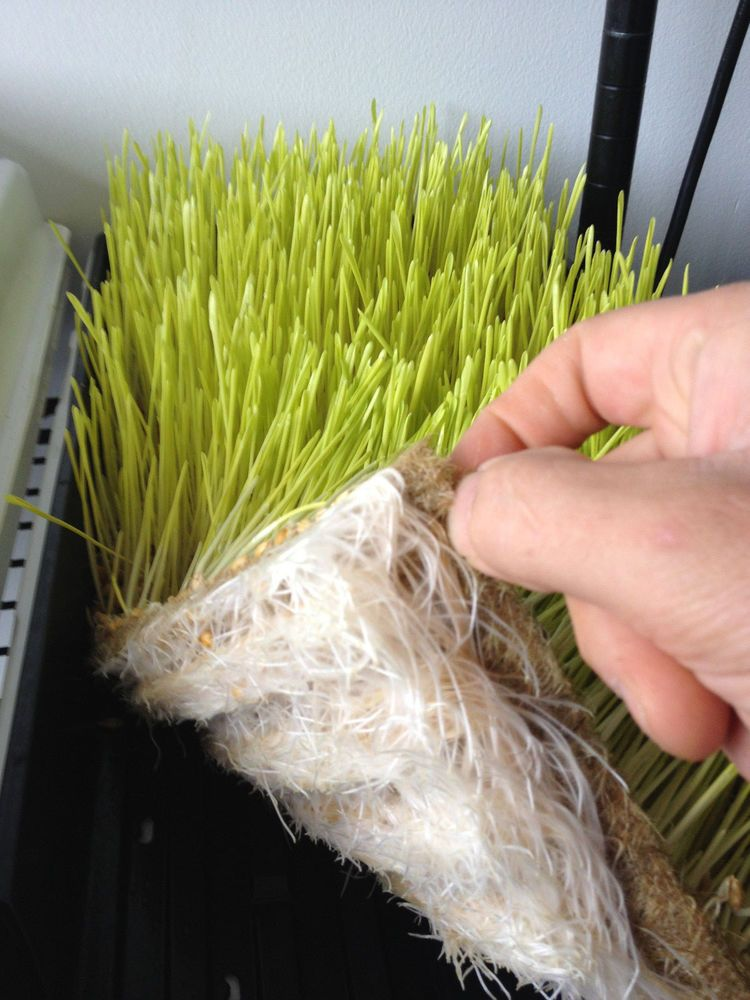 Eco friendly growing medium for starters microgreens for Best growing medium for microgreens