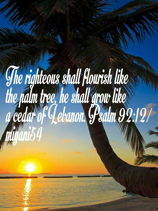 The Righteous Shall Flourish Like The Palm Tree Bible Scriptures