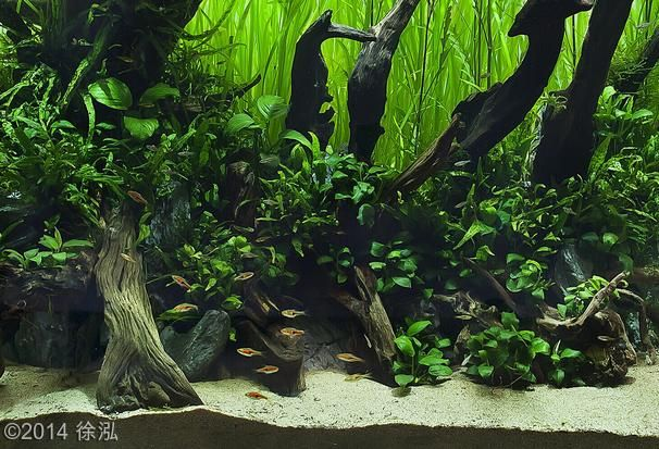 2014 aga aquascaping contest entry 310 freshwater. Black Bedroom Furniture Sets. Home Design Ideas