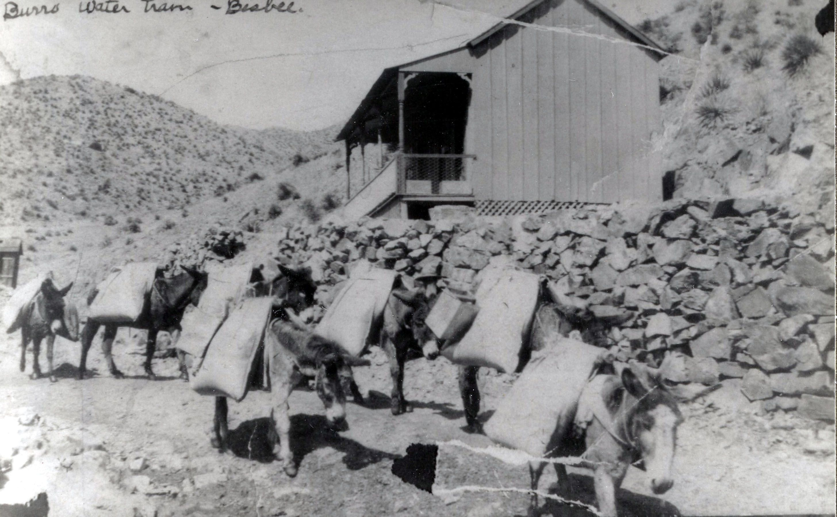 Burros were used to haul water to the residents of Bisbee, Arizona before running water was available in homes. Here we have a 1905 image of burros transporting water in the upper end of Brewery Gulch. This image is from the photograph collection of the Bisbee Mining Historical Museum. Discover more Bisbee, Arizona images and artifacts at www.facebook.com/BisbeeMuseum. #bisbee #arizona #burro #history