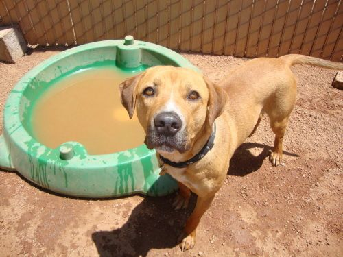 Adopt Roscoe on Petfinder
