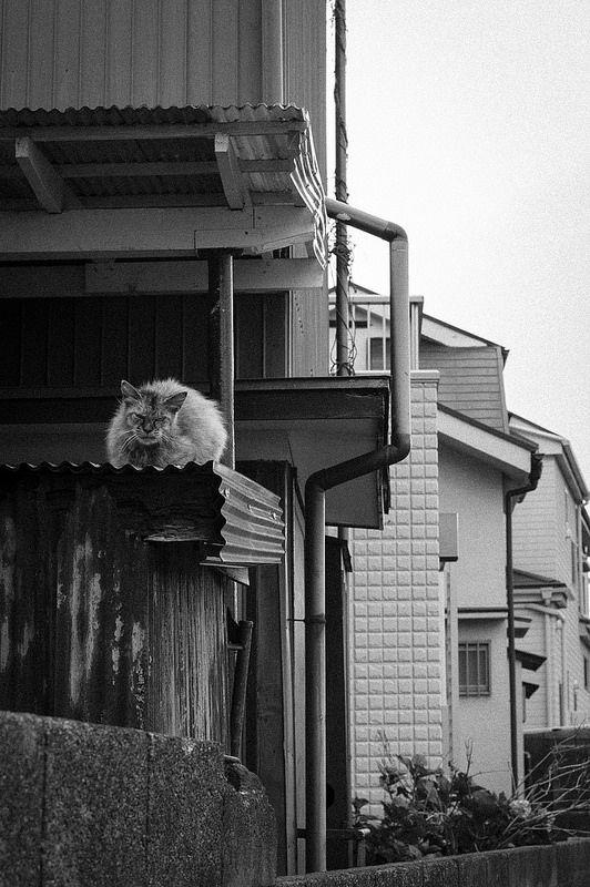 東京猫色 : 毛玉猫。Furball