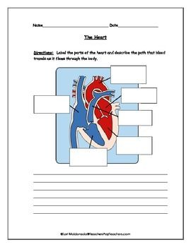 Cardiovascular system heart diagram to label life science students will label the parts of the heart and describe the path that blood travels as it flows through the human circulatory system ccuart Image collections