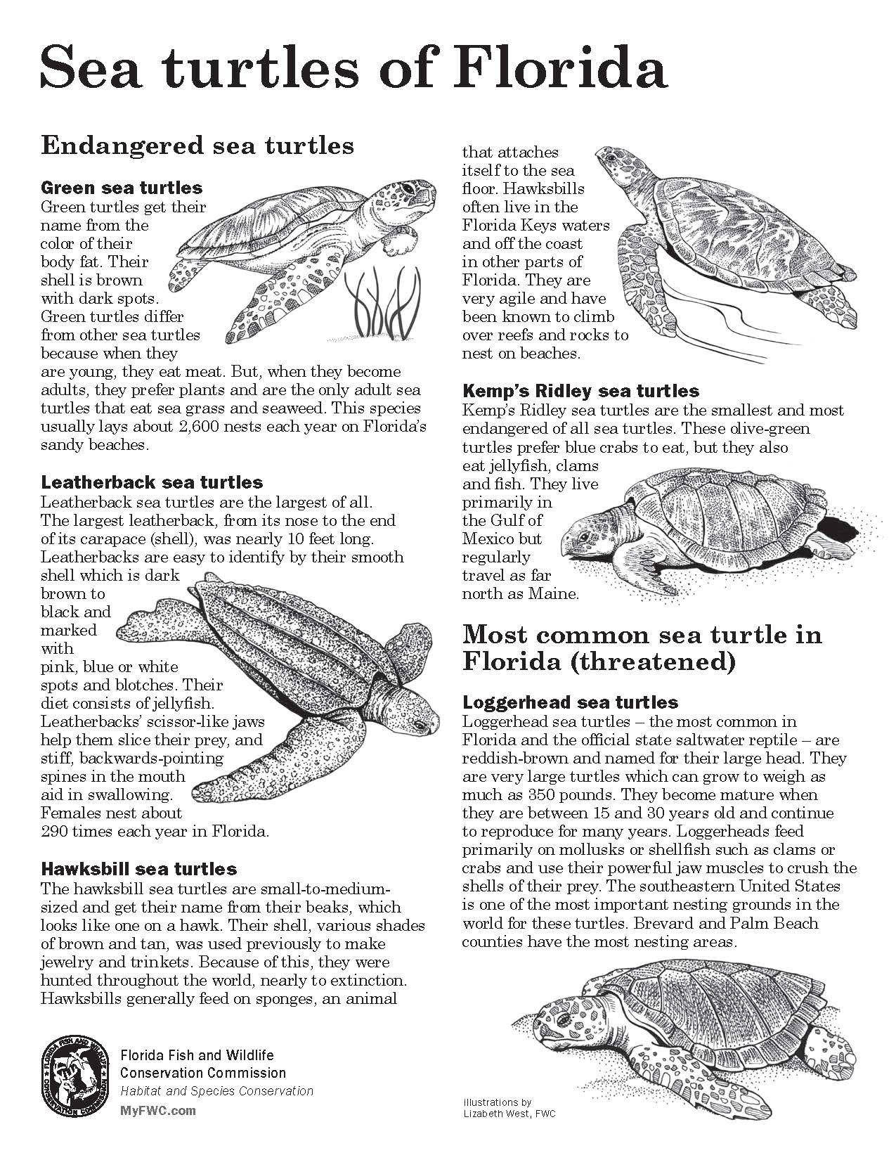 Sea Turtle Activity Sheets Find More Kids Activities Here