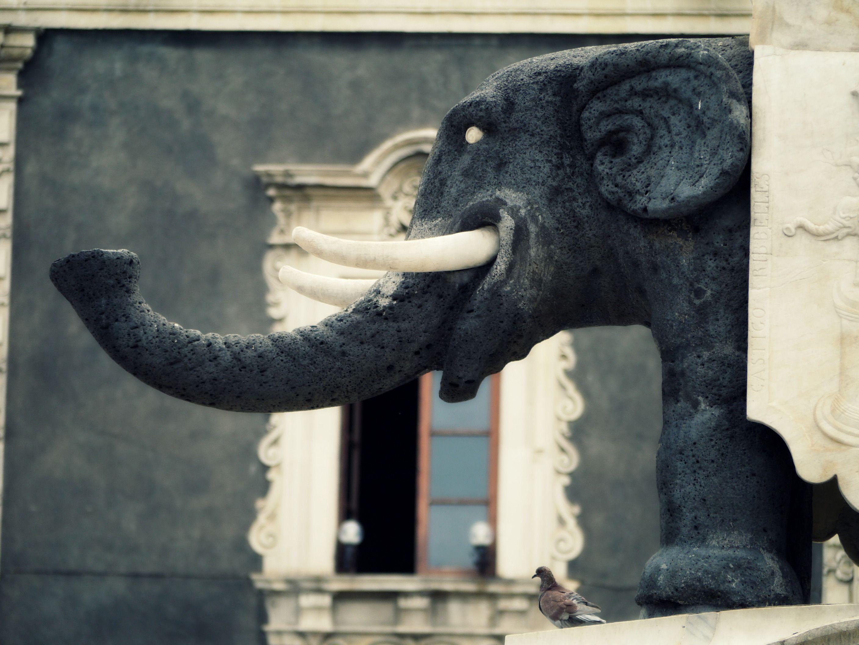 "Day 4 - Catania - the famous ""Liotru"" statue, antique lava-stone elephant, symbol of the city."
