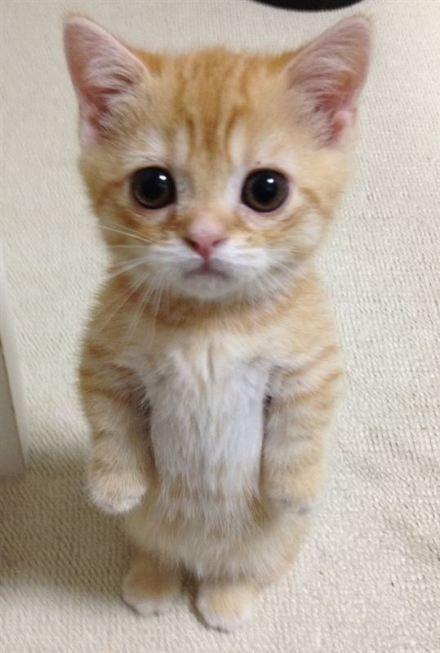 Cute standing cat! Cute animals, Cute little kittens, Cats