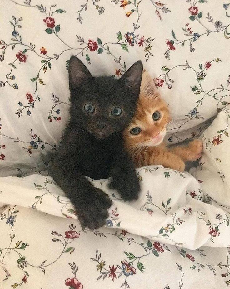 ¿Estás listo para tener un gato? - Lo que necesitas para empezar -  ¿Estás listo para tener un gato? – Lo que necesitas para empezar  - #allergictocats #catcat #cathouse #cattattoo #catwallpaper #catsandkittens #crazycats #dogcat #empezar #estas #Gato #gatosaesthetic #Gatosanime #Gatosartesanato #gatoscats #Gatosdibujos #Gatosmanualidades #gatosmemes #gatostattoo #gatosvideos #listo #necesitas #para #petscats #tener #tudosobreGatos