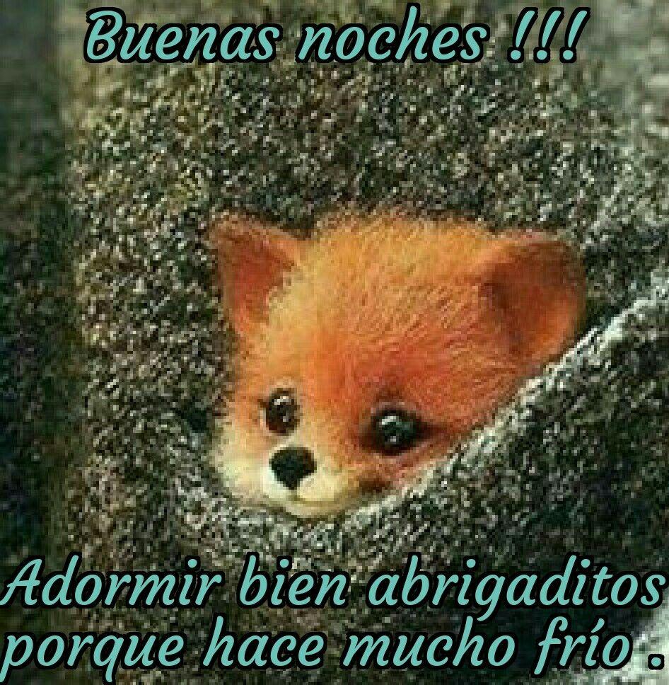 Pin De Sarita Castillo Palma En 00 Saludos De Buenas Noches Buenas Noches Perros