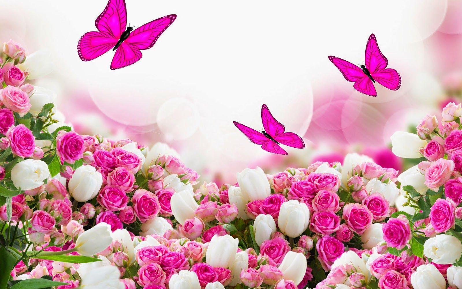schmetterlingen tulpen und rosen  hd hintergrundbilder