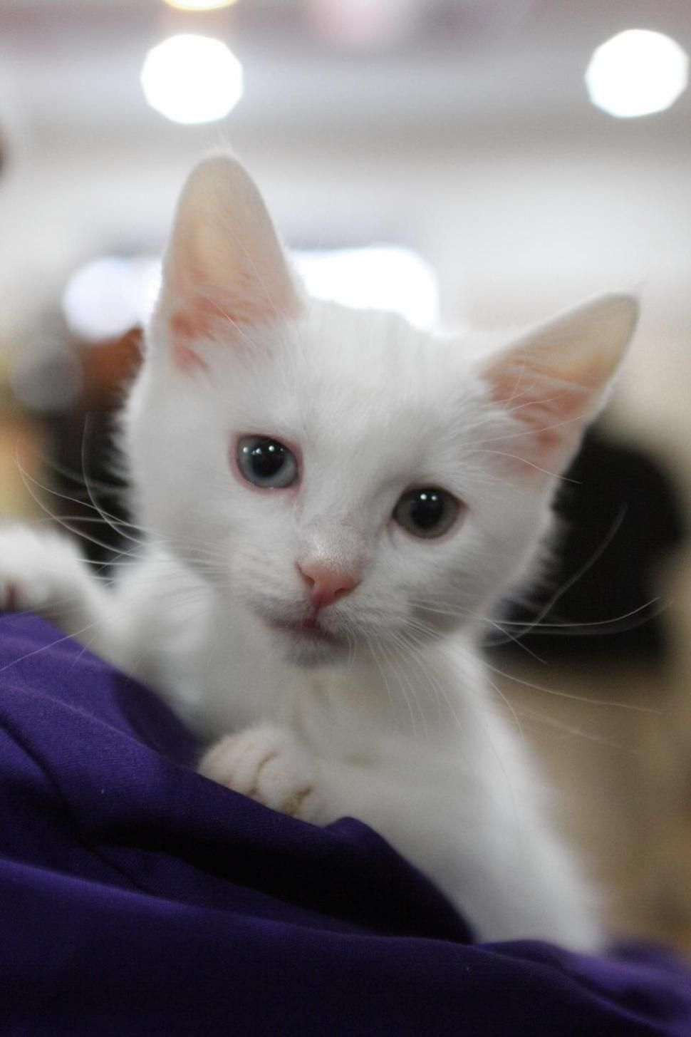 Tiny Orphaned Kittens Get Round The Clock Care At The Aspca S