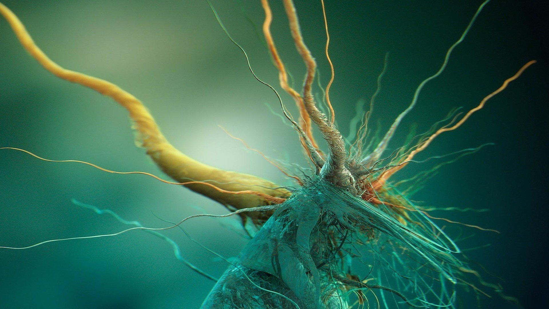 Nerves Wallpaper Background Nikon Small World Abstract