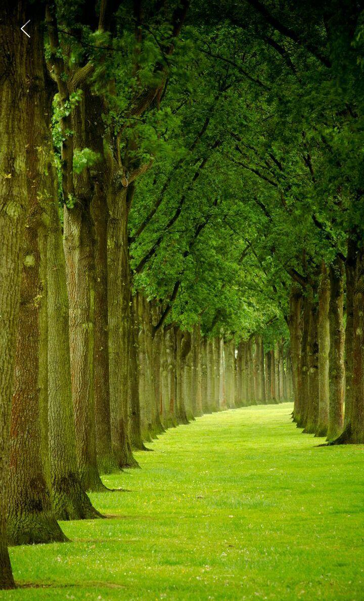 Follow my pinterest: rckeyru #rckeyru #rckey #rckeypn | Landscape My ...