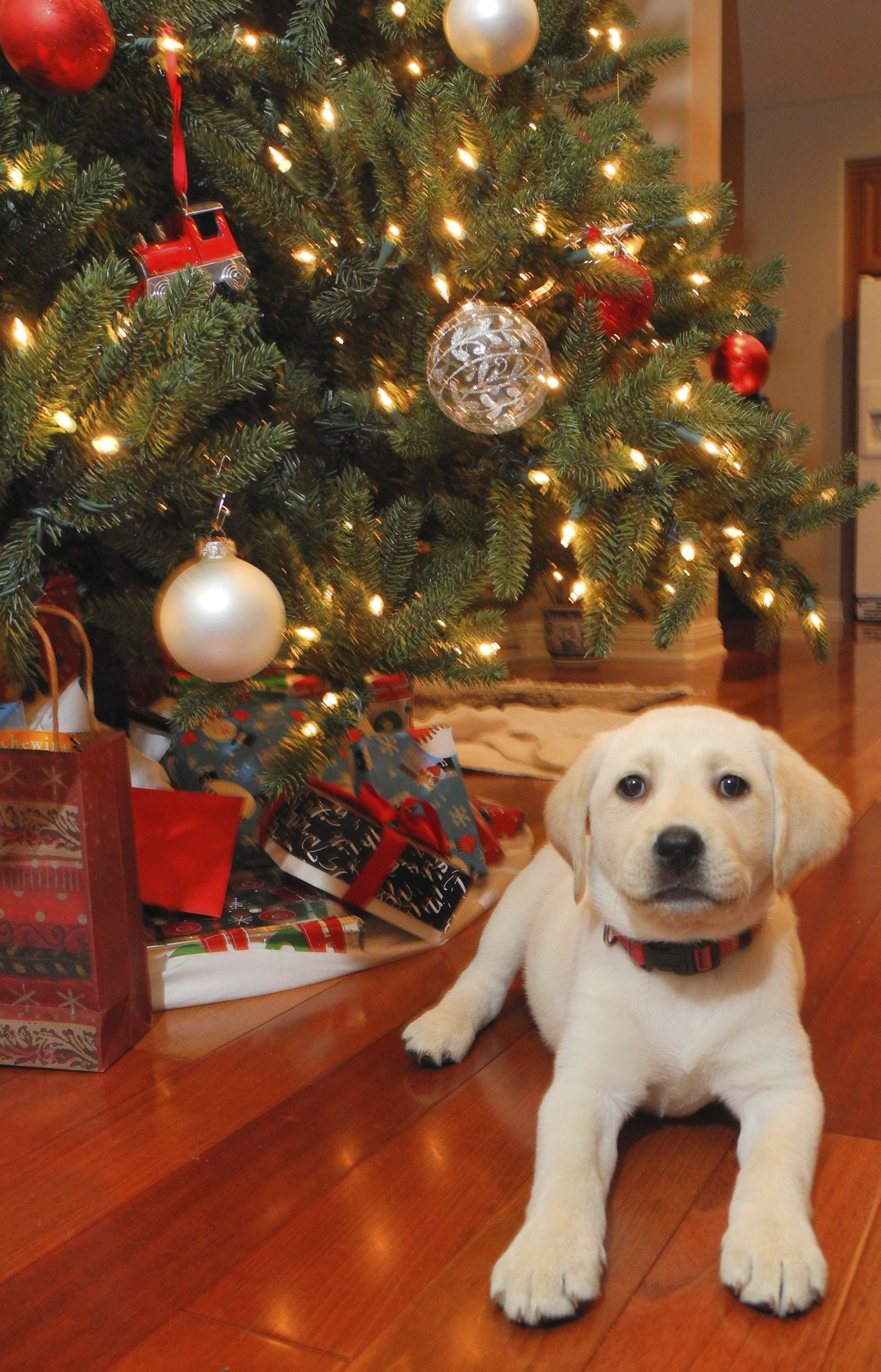 How to Pet Proof Your Home for the Holidays. petproofhome