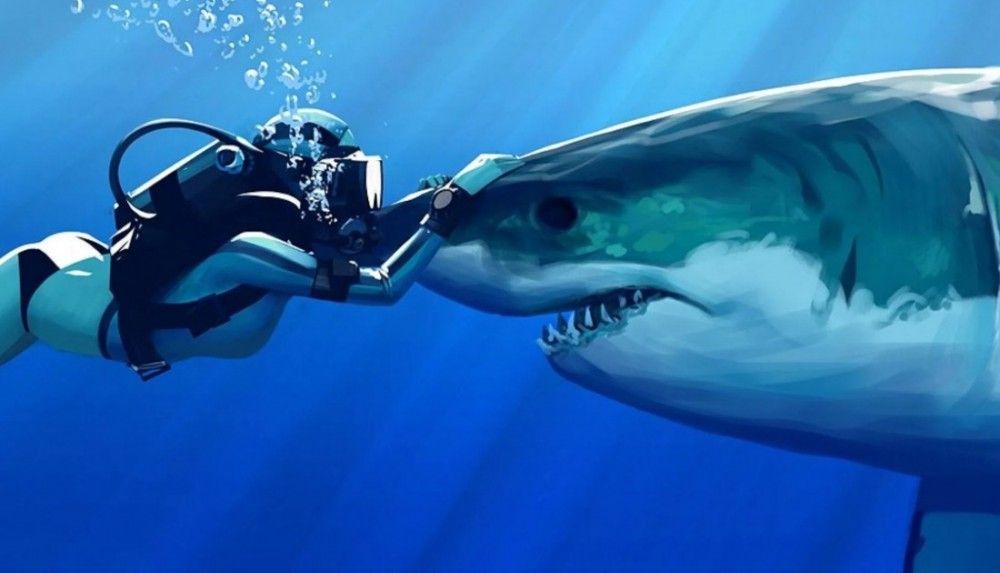 Благодарность акул | Картинки с акулами, Акула, Большая ...