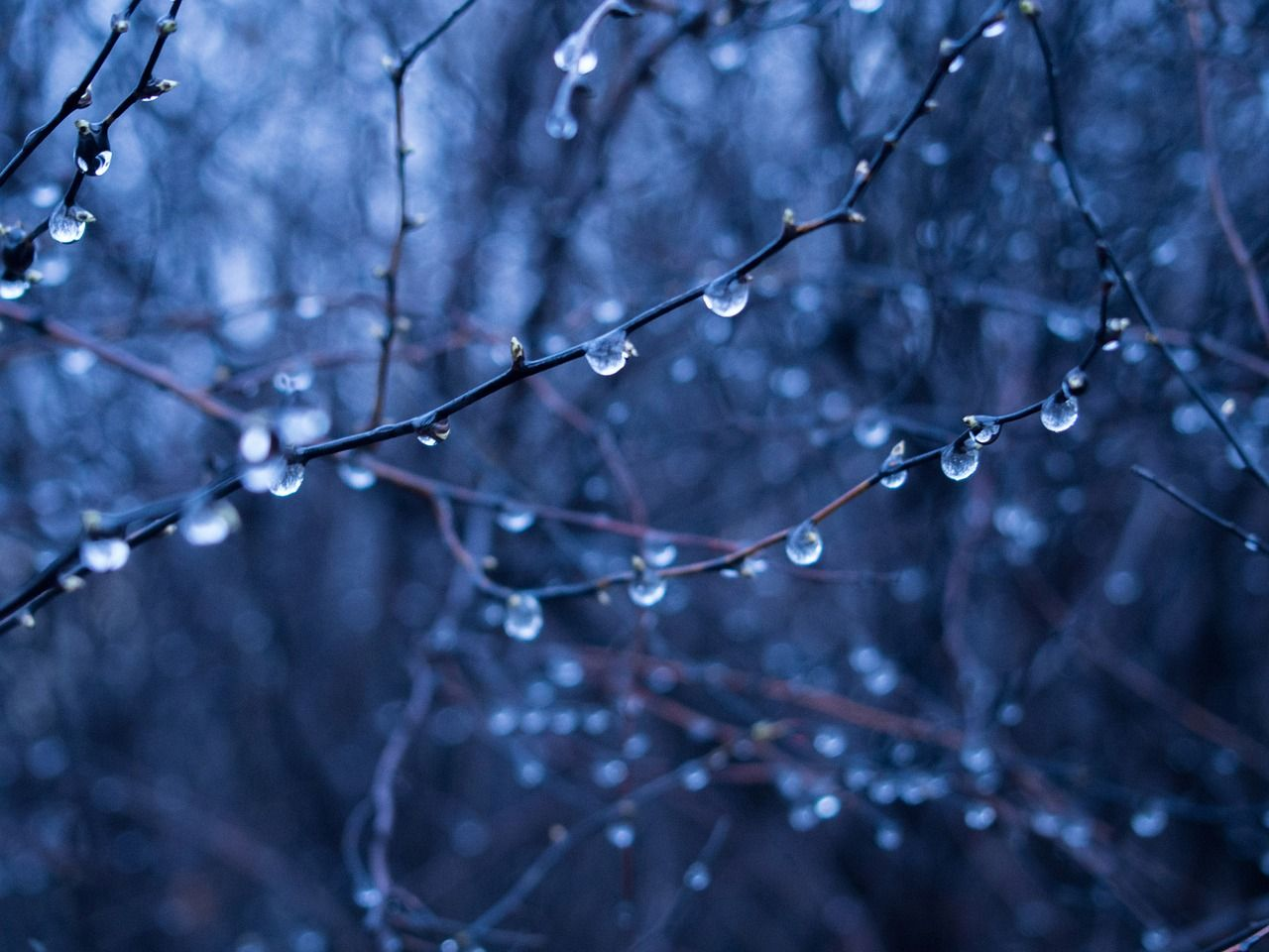 Free image on pixabay rain drops wet branches trees
