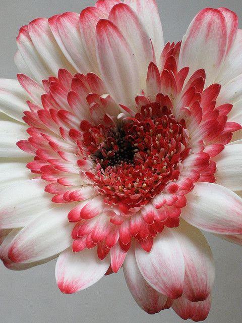 Heart ! find romantic songs. design your musical journey www.muzikool.com