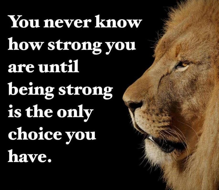 Pin By Keerthanaa Ravi Chandran On Lion Quotes Forever