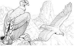 Condor Para Colorear Buscar Con Google Condor Dibujo Como Dibujar Cosas Condor De Los Andes