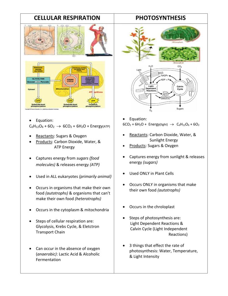 Photosynthesis Vs Cellular Respiration Photosynthesis Worksheet Photosynthesis And Cellular Respiration Photosynthesis