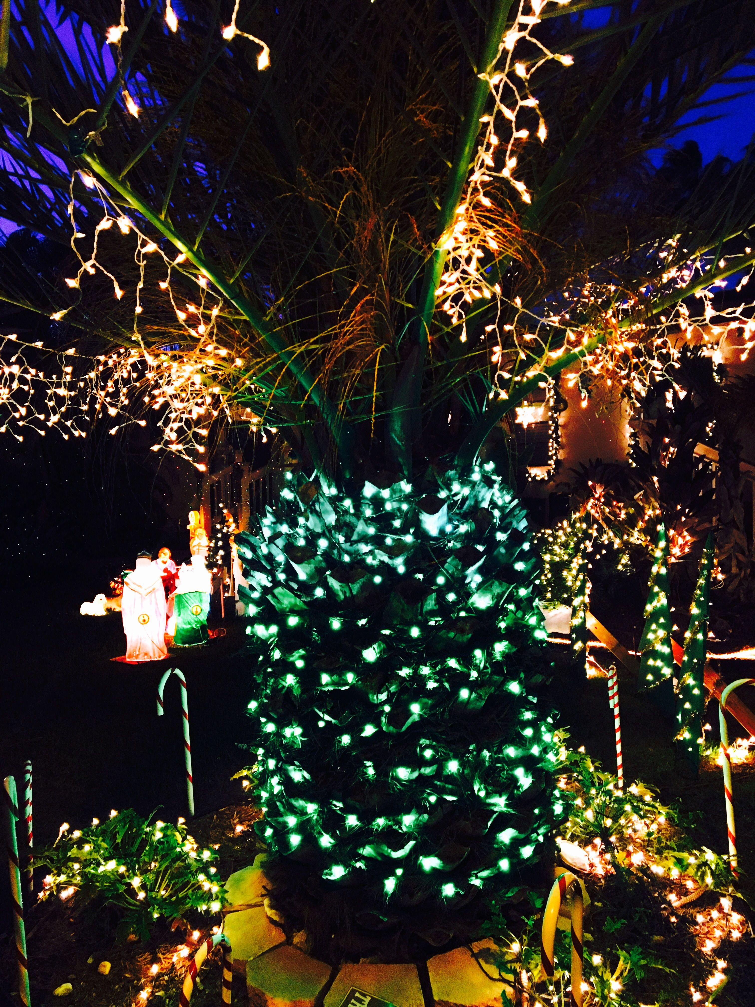Key West Christmas Palm Tree | Christmas in Key West | Pinterest