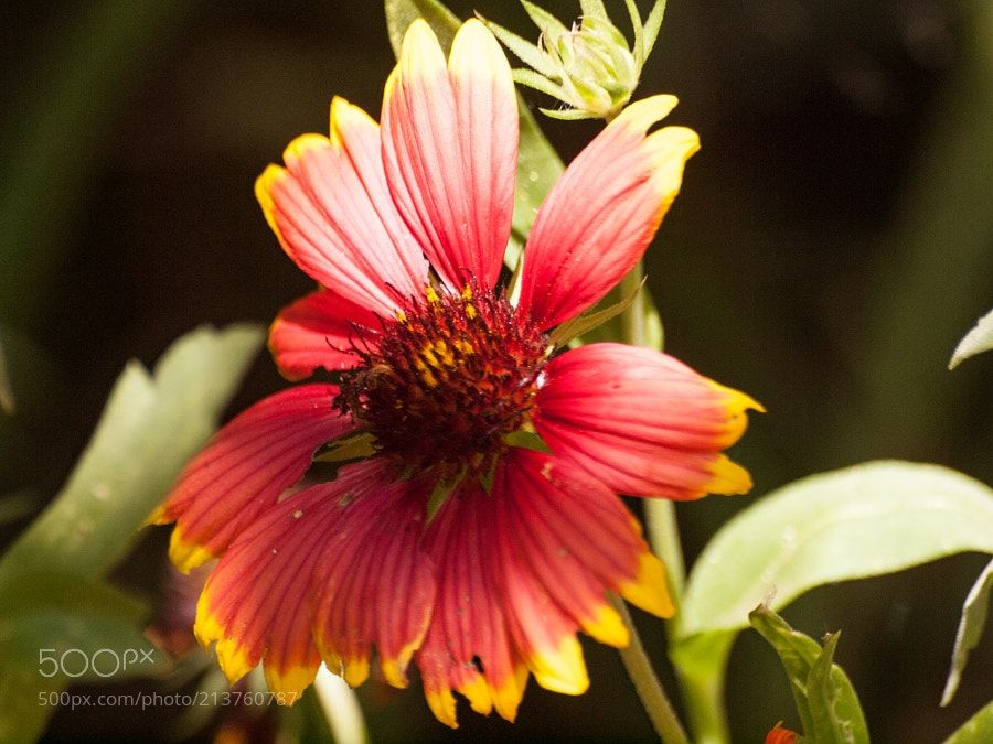 Red and Yellow Delight - Rich colors and textures