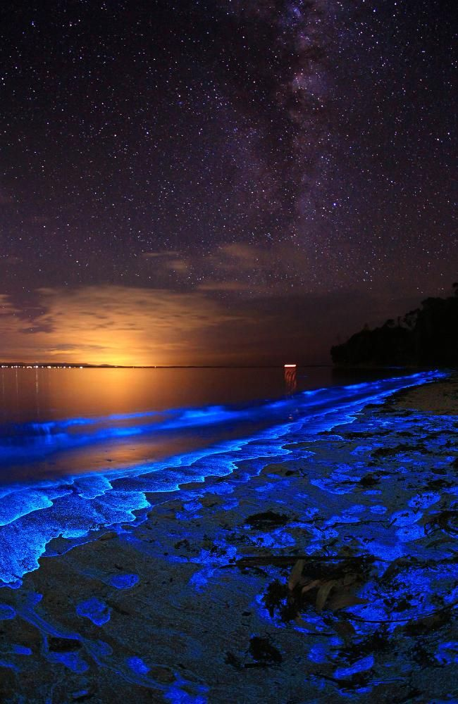 Bioluminescent Plankton Along The Shore Of Jervis Bay In Booderee - Bioluminescent shrimp create blue rivers of light in japan