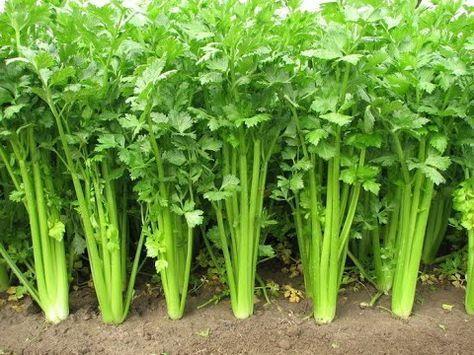 Vegetables Vegetable Garden Shade Vegetables Gardening 400 x 300