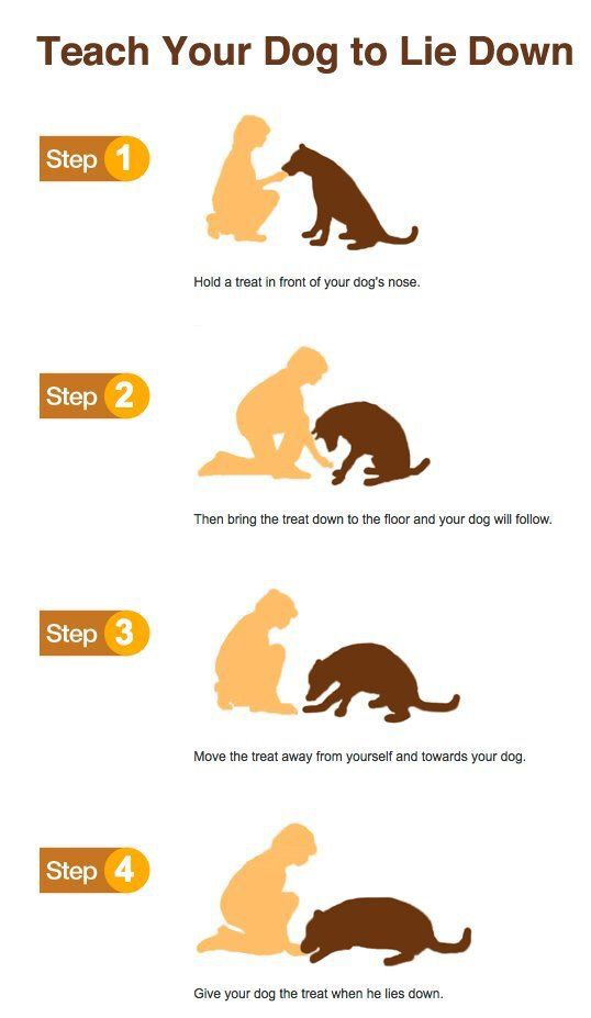 Teach To Lay Down Your Dog Puppy Training Tips Dog Training Dogs