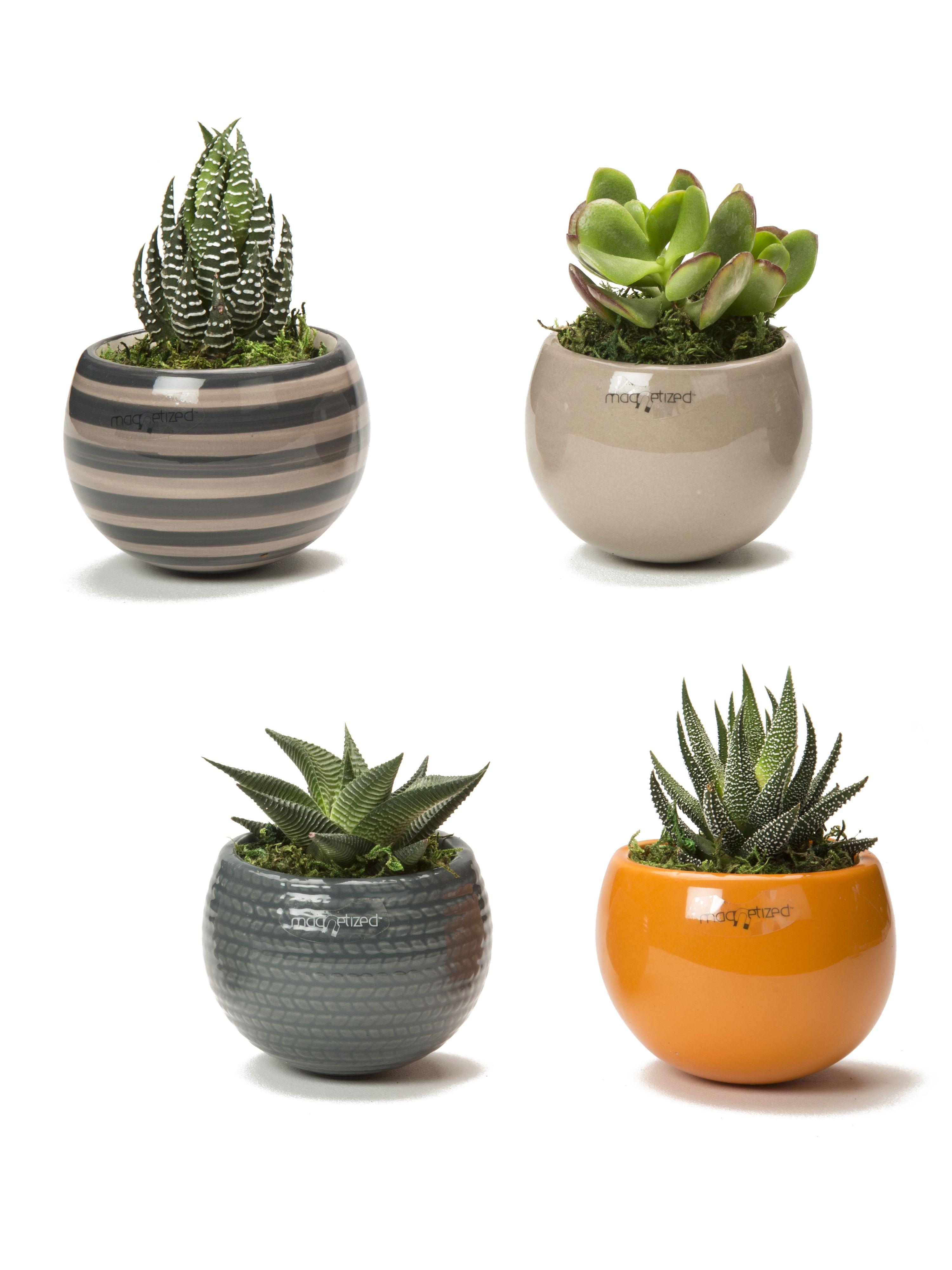 Nordic Mini Magnet Succulent Garden, Set of 3 | Indoor Garden ...