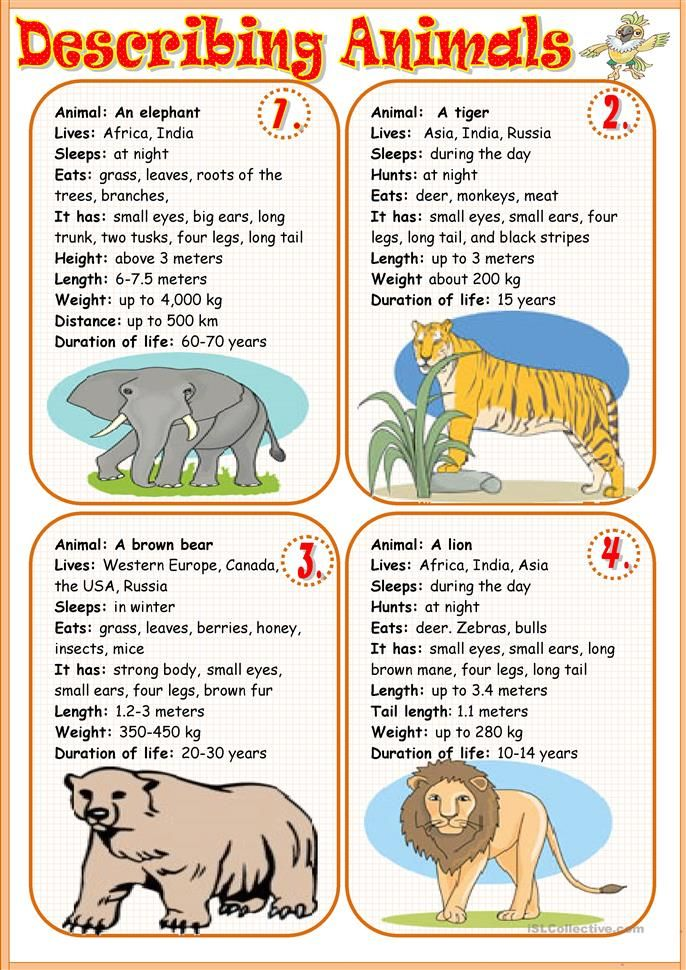 Describing animals 1 English activities, Learn english