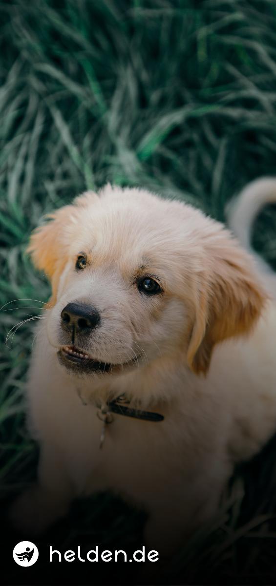 Pin Auf Tipps Fur Hundeliebhaber