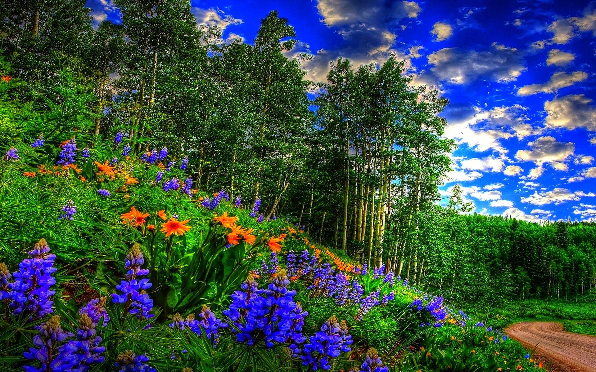 Free Desktop Wallpapers Spring Scenes Wallpaper Hintergrundbilder Hintergrundbilder Natur Schone Natur