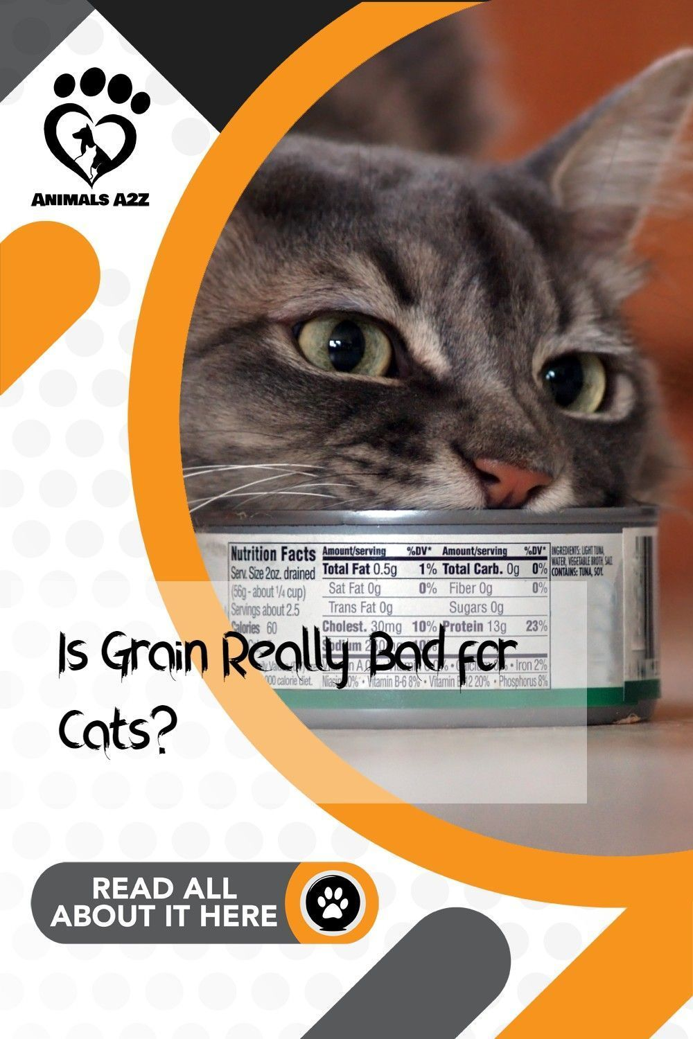 Is grain really bad for cats? in 2020 Cat diet, Cats