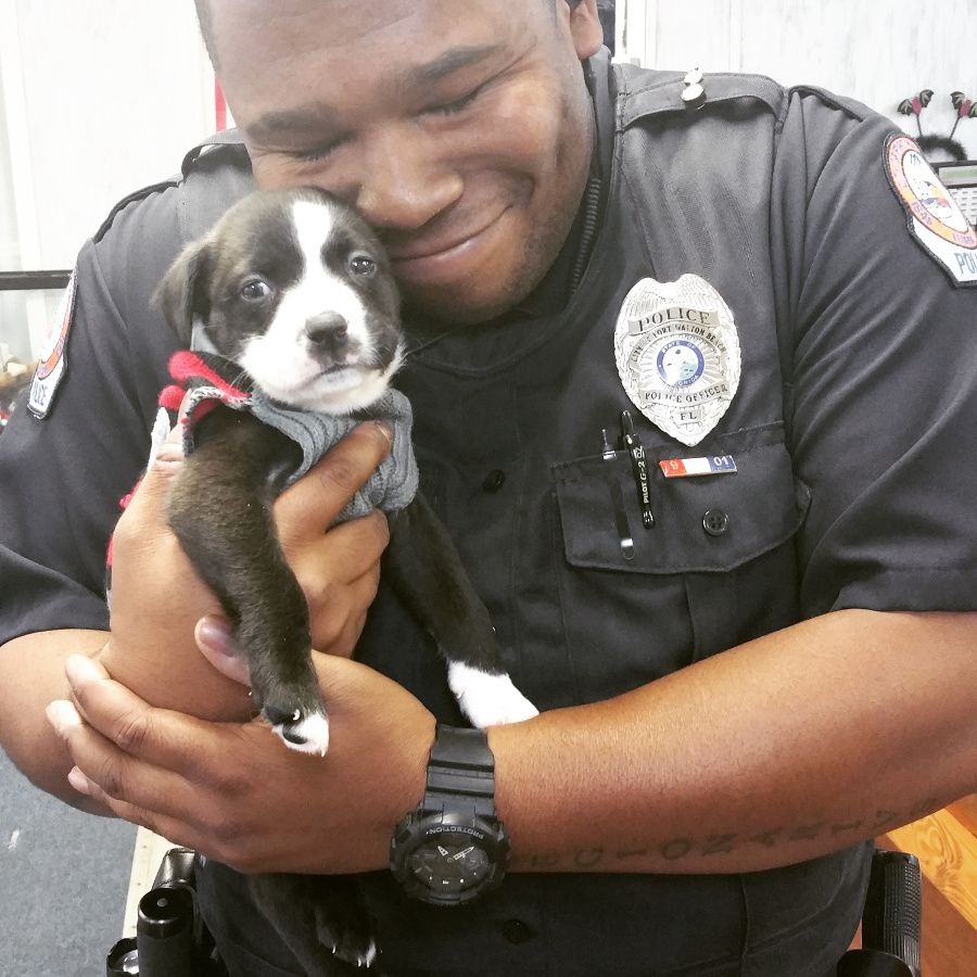 Cop Rescues Abandoned Shelter Puppy and We Can't Tell