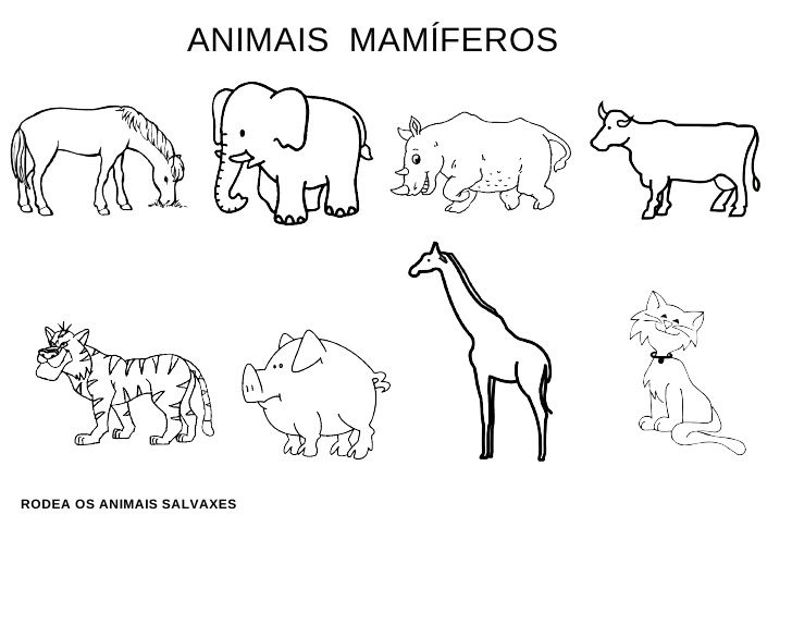 Fichas de animales mamferos  LOS ANIMALES  Pinterest