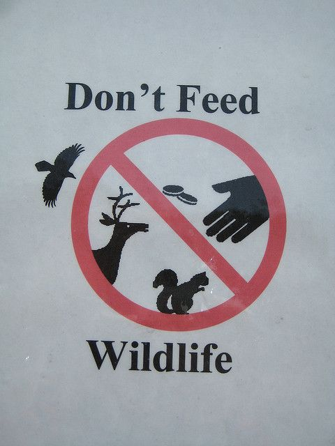 Don't feed our wildlife!