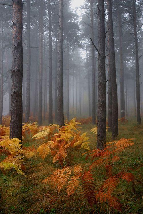 Fall Fog Love