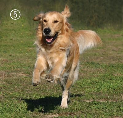 How To Decode Your Dog S Body Language Dogs Golden Retriever