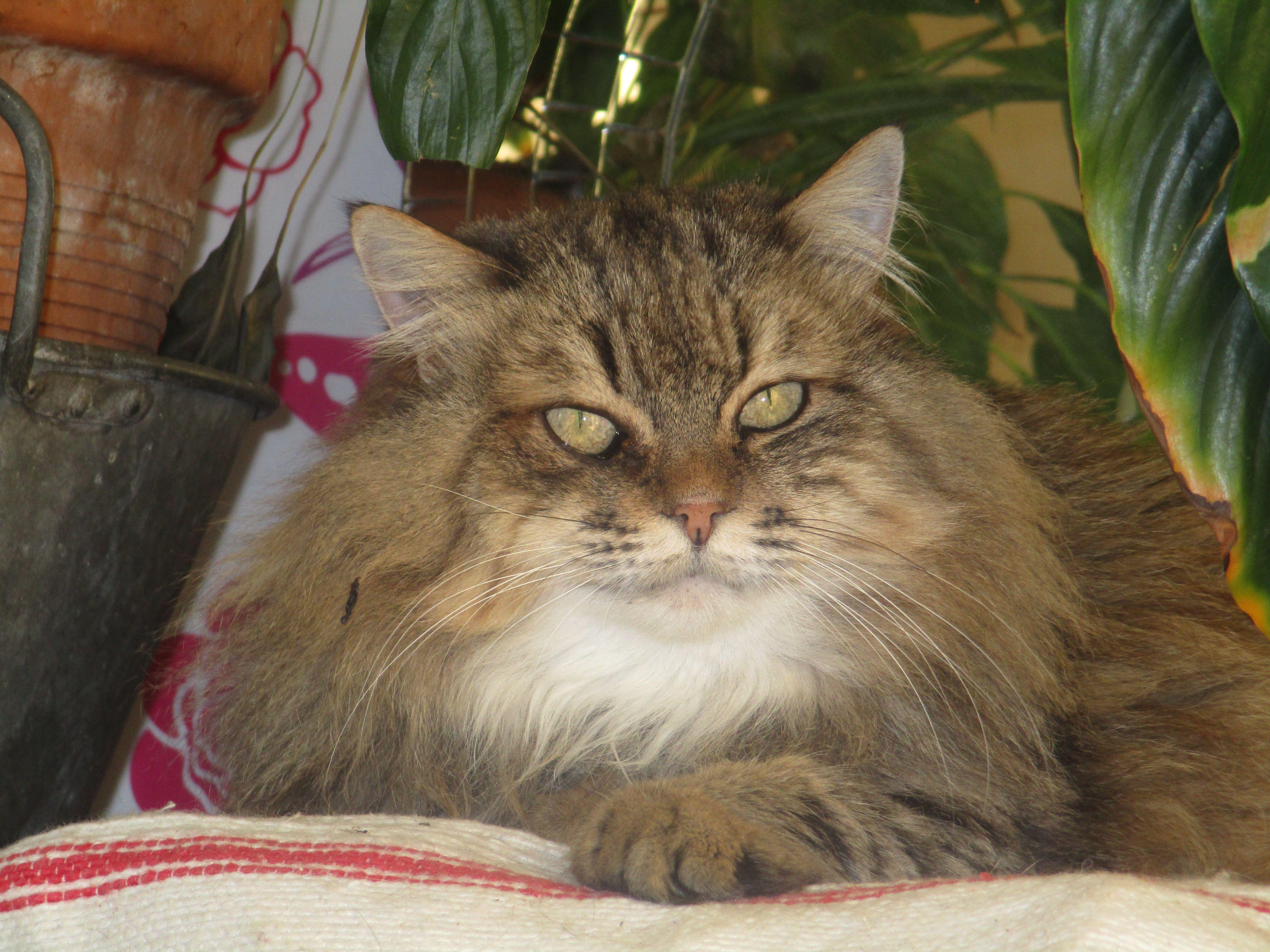 La belle Lucie   Cats, Animals