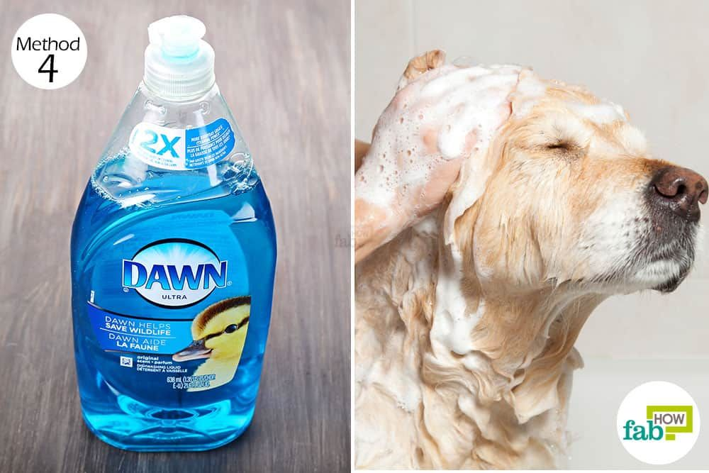 Can You Wash Your Dog With Dawn Dish Detergent Wash Your Dog With Dawn Dish Soap To Get Rid Of Fleas Dawn Dish Soap Home Remedies For Fleas Dog Flea Remedies