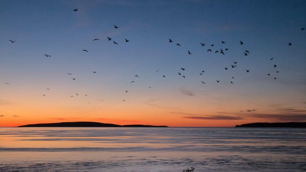 Birds in sunset across Eynhallow Sound