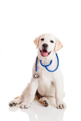 Dog Walking Linked To Better Physical Health For Seniors Dog Clinic Dog Stock Images Dog Training Near Me