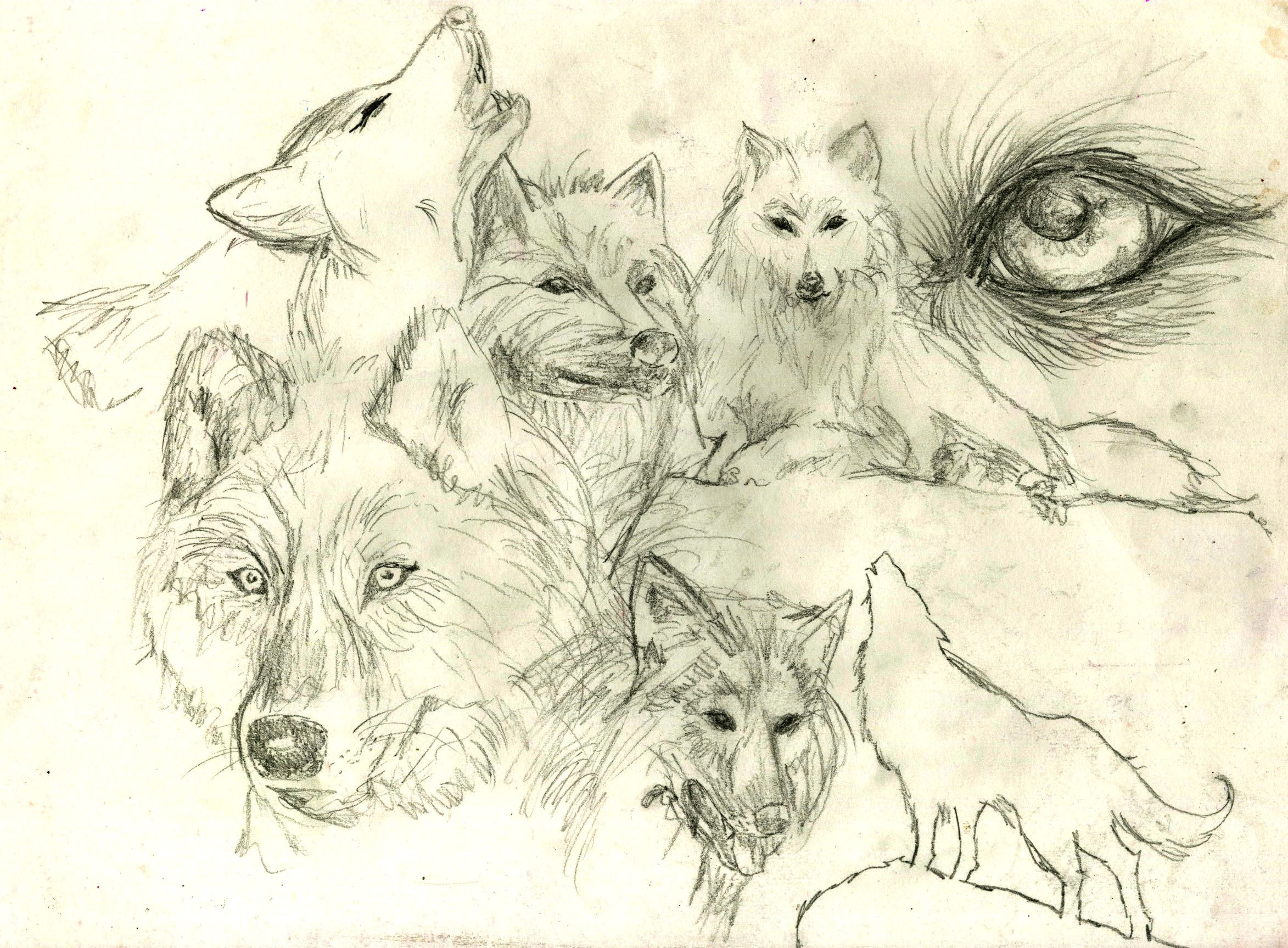 drawn collage of wolves
