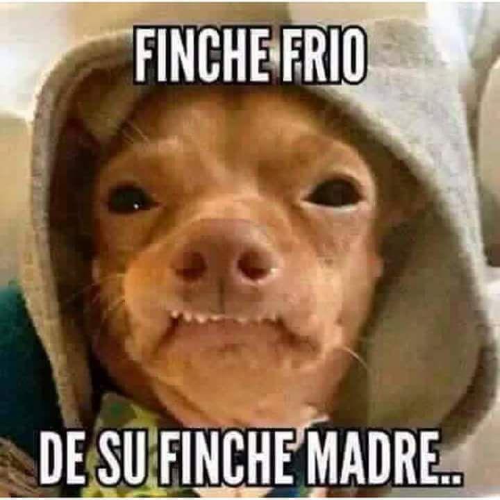Pin De Crystal Salazar En Bahaaa Spanish Chingaderas Chistes De Frio Memes De Frio Chistes De Animales
