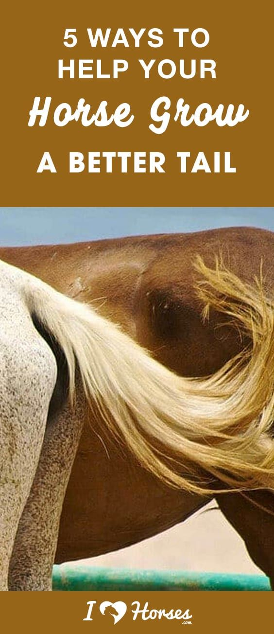 Pin On Horse Mane Tail Ideas